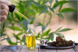 Benefits-Of-Hemp-Seed-Oil-For-Great-Health.jpg